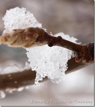 snow, vdaycards, primrose 2.10 080