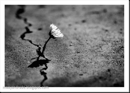 flor-forte
