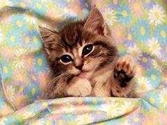 020_cute