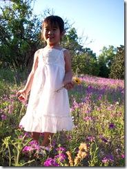 wildflowers 099