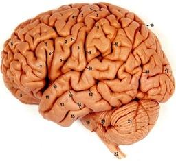 brain eluru