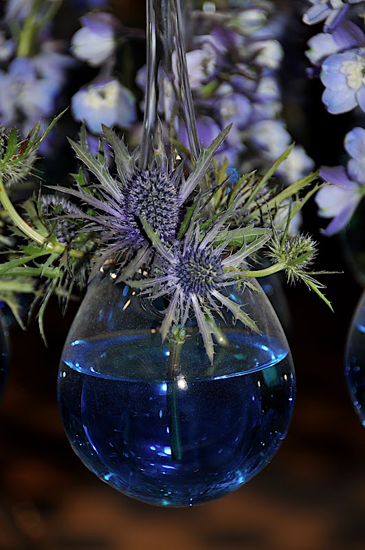 teasel in bottle vase with blue water