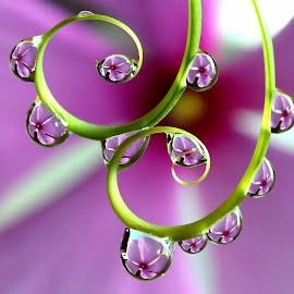 by Wahyudi Barasila - Nature Up Close Natural Waterdrops ( Free, Freedom, Inspire, Inspiring, Inspirational, Emotion,  )