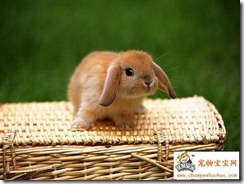 Baby bunny on wicker basket