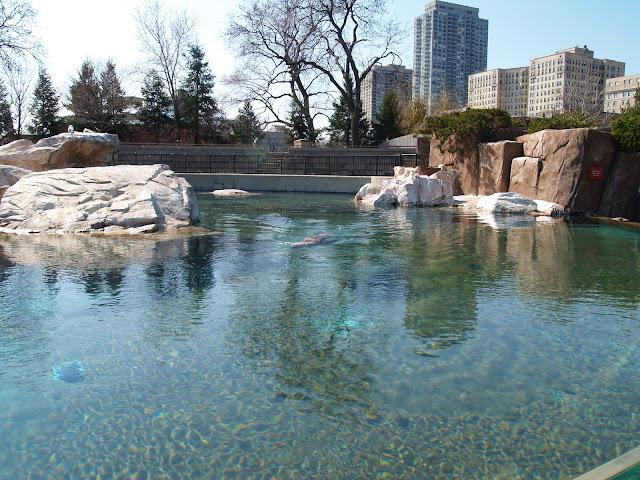 林肯动物园 与唐维夫妇聚餐 - bldr - Georges blog