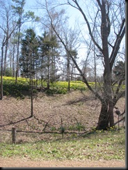 Daffodil gardens 010