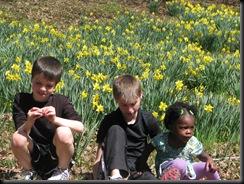 Daffodil gardens 020