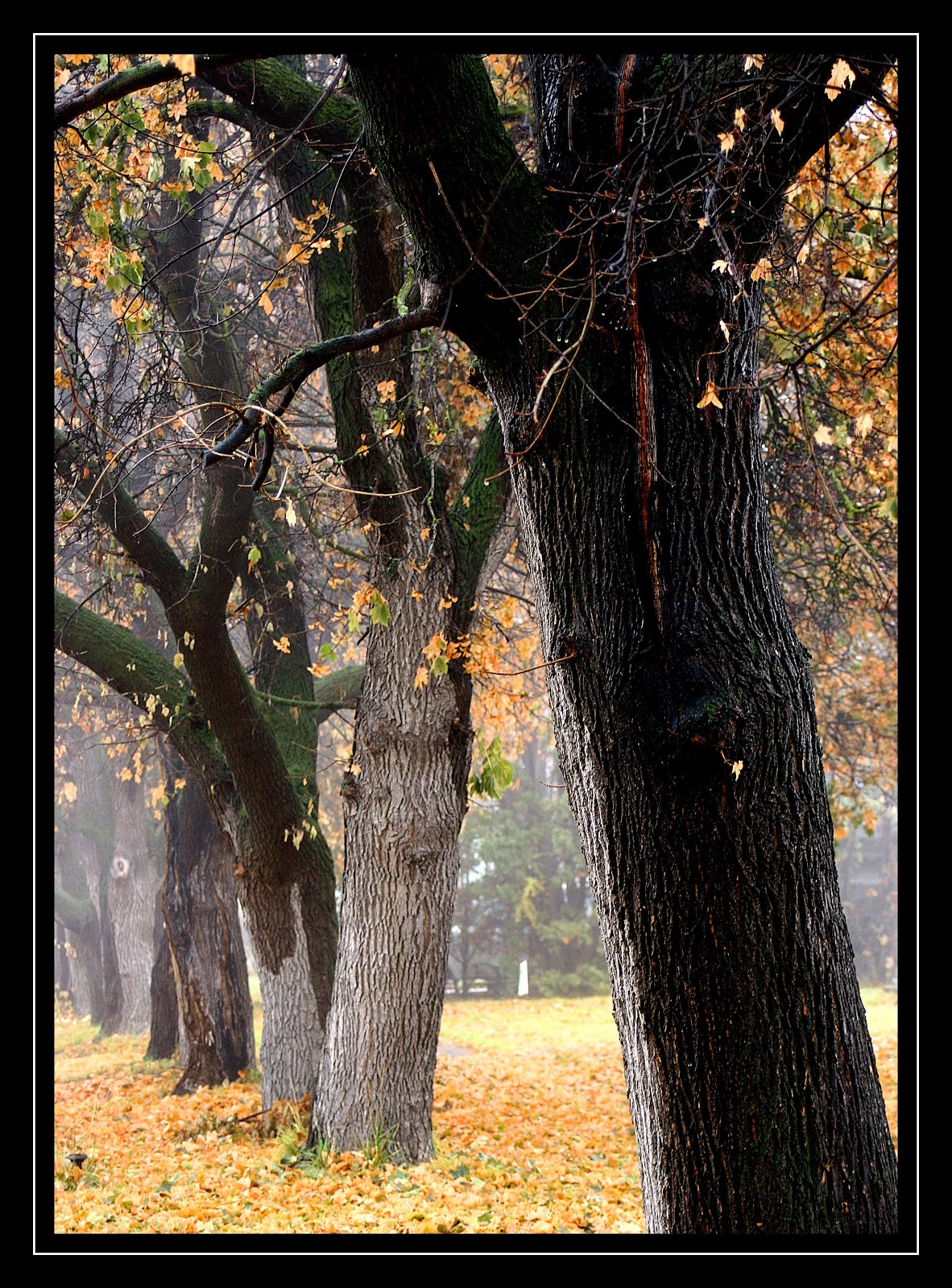 [foggy fall 3[3].jpg]