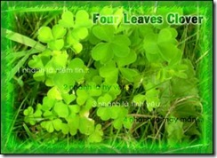 cỏ bốn lá