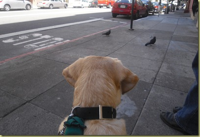 Reyna sits on the sidewalk and calmly watches several birds who are walking towards her.