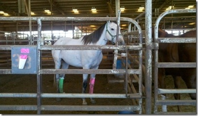 vilonia horse