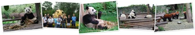 View Panda Pictures