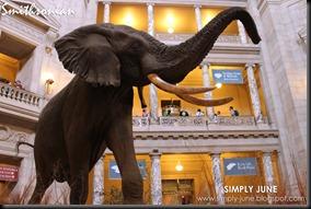 Smithsonian4