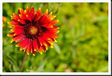 Danville-Flower