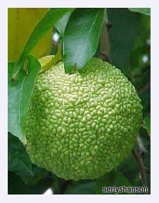 китайский апельсин