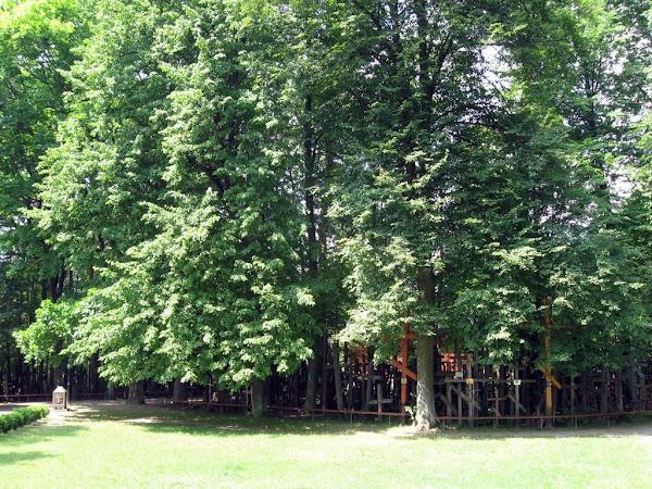 Góra Grabarka - las krzyży