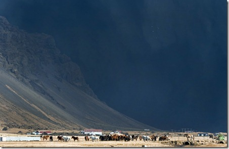 Horses graze in a field near the Eyjafjallajokull volcano as it continues to billow dark smoke and ash during an eruption late on April 17, 2010. (HALLDOR KOLBEINS/AFP/Getty Images) #