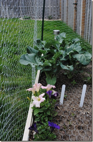 Garden May 18 (7)