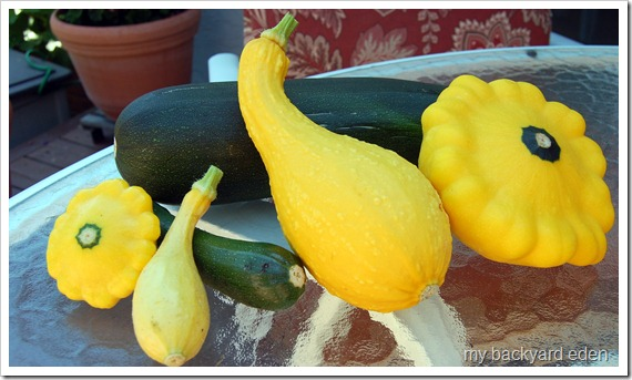 franken squash