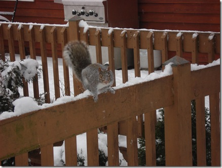 squirrels 020