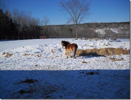 horses outside 014
