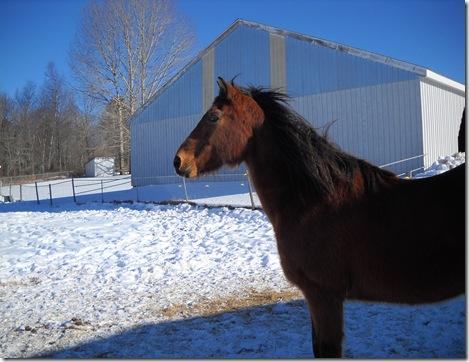 horses outside 019