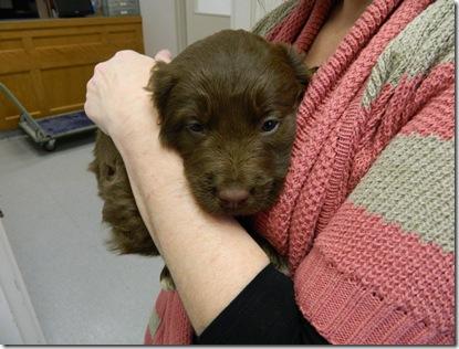 Bangor Humane Society 019