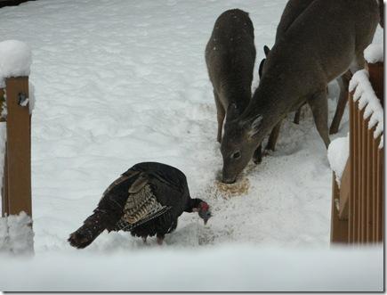 deer 048