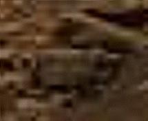 Beagle_L257atc-B937R1_br2121.jpg