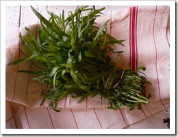 The fiery dragon herb, Tarragon