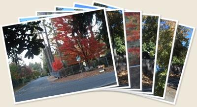 View Fall Foliage