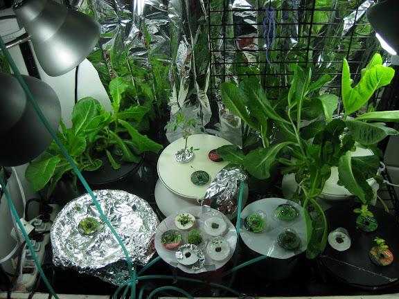 Cucumber, Tomatos, Lettuces & Herbs