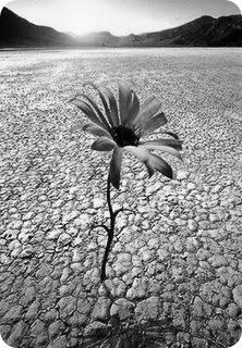 aún en el desierto puedes florecer