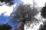 The Ada Tree