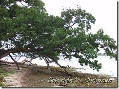 Liggende træ