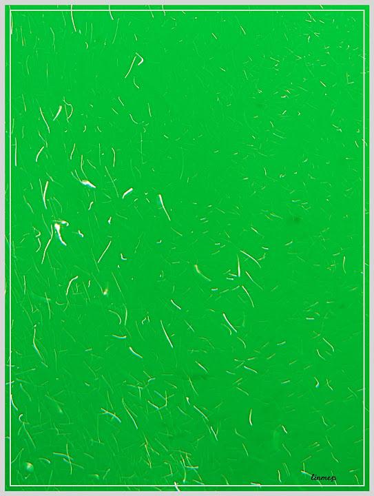 Challenge d'Avril 2010 : Abstrait : fin le 27 Avril P1030056