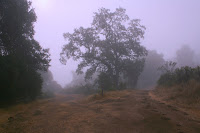 Foggy Day at Grant.JPG Photo