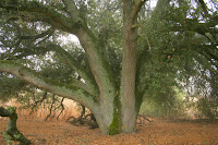 Seven Trunks 1.JPG Photo