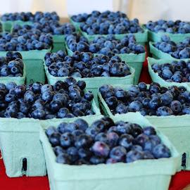 A Bushel of Blue Berries by Hannah Cohen - Nature Up Close Gardens & Produce ( bear, red, farmer, blue, green, grow, ontario, harvest, blueberries, black, country, berries,  )