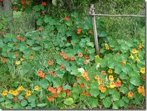 Nov garden 2010 023