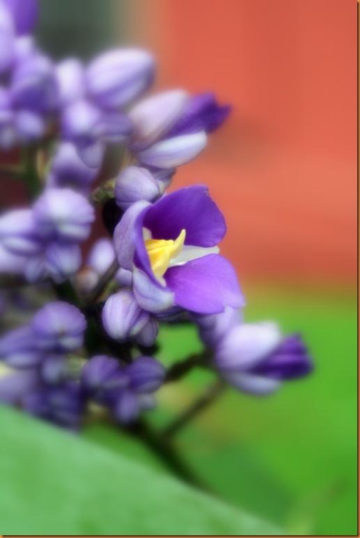 flora 030