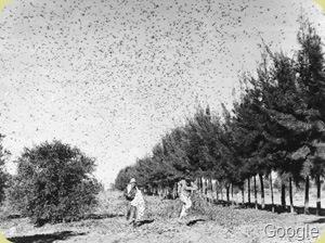 grasshopper plague 2
