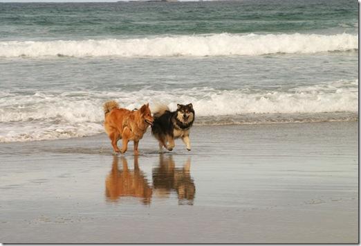 Gøy på stranden