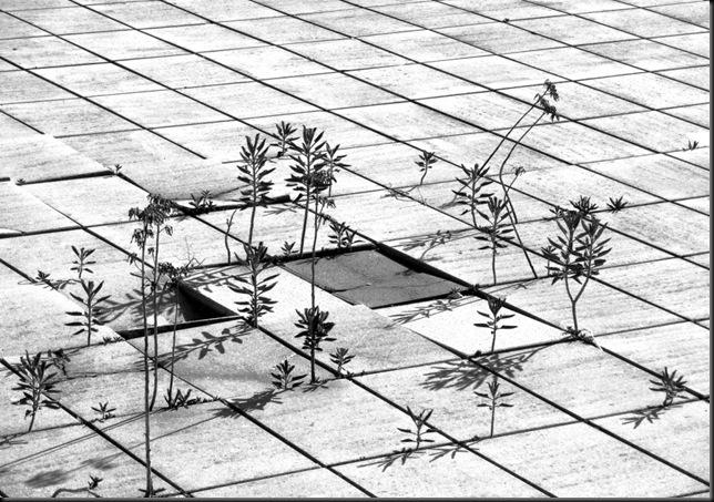 terraza Bib Nacional