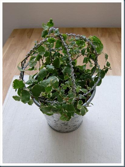 4 topiary