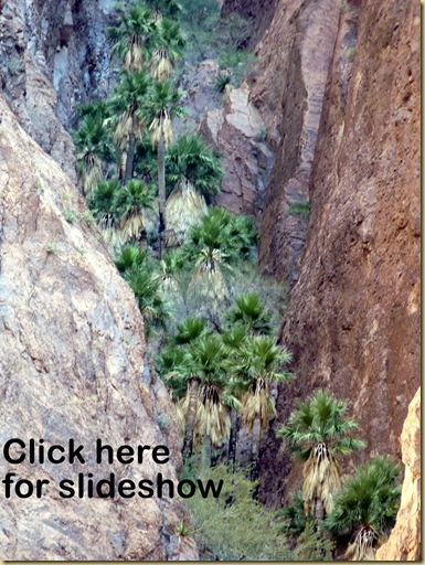 2010-03-20 - AZ, Yuma, Palm Canyon - Hike -24 [50%]