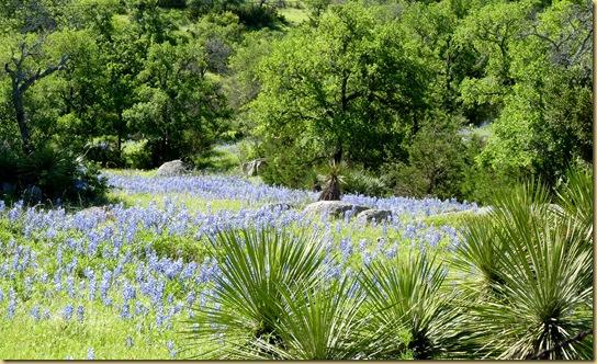 2010-04-24 - TX, Fredericksburg - Bluebonnets & Spring Flowers - 1007