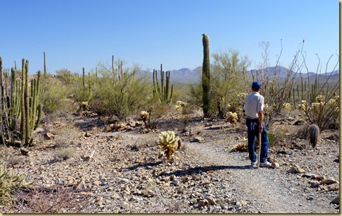 2011-04-21 -3- AZ, Organ Pipe Cactus National Monument (49)