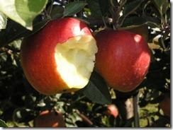 fruit-bite
