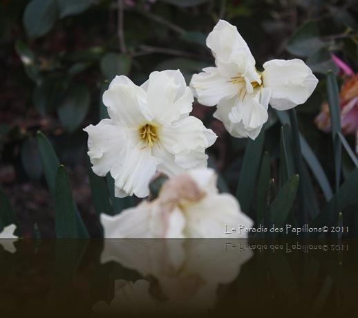 giardinomarzo2011 055